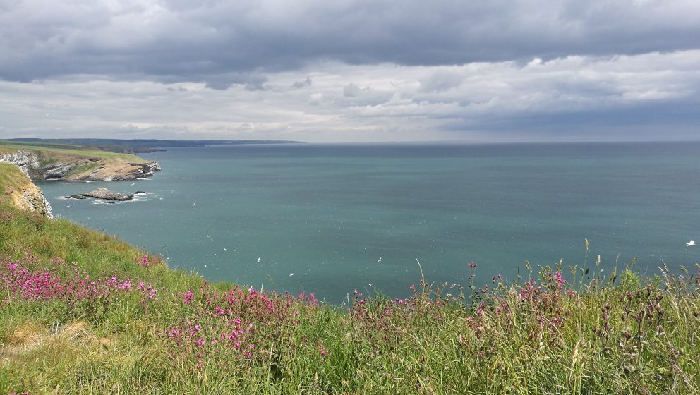Shot looking to where wind farm will be, taken from cliff top with spring flowers