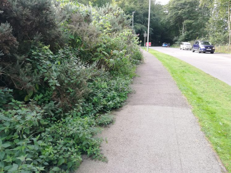 Pathway with shrubs